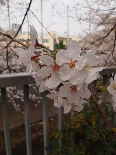 神田川公園