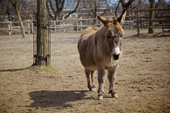 Dusty the Donkey