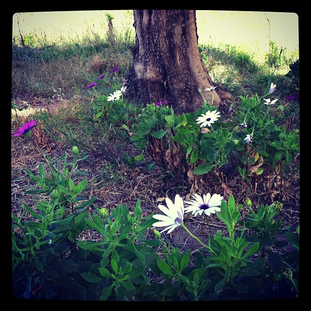 #flowers #grass #white #green #tree