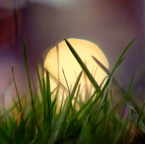 sunset macro film grass closeup oregon analog square portland bokeh lawn pacificnorthwest frontyard pentaconsixtl extensiontubes bluemooncamera zeissbiometar
