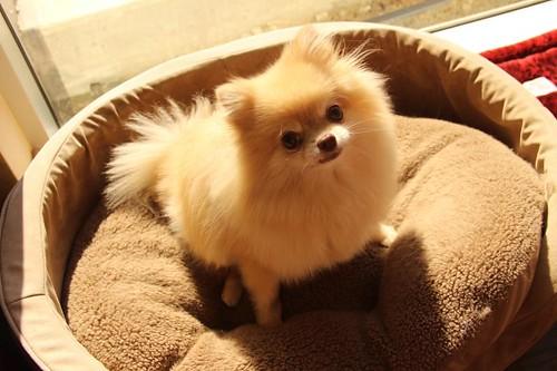 Citizens of Humanity Pomeranian