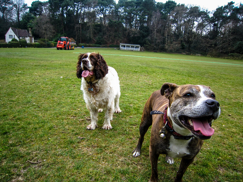 Jez and Max are happy playing ball on the cricket pitch