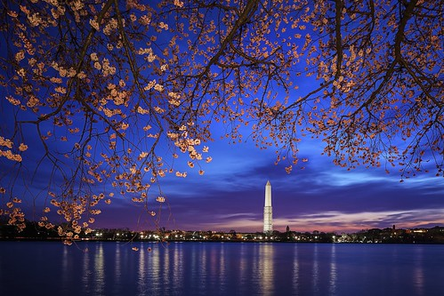 sunrise dc washington cherryblossoms washingtonmonument