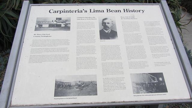 IMG_8018 Carpinteria's Lima Bean History
