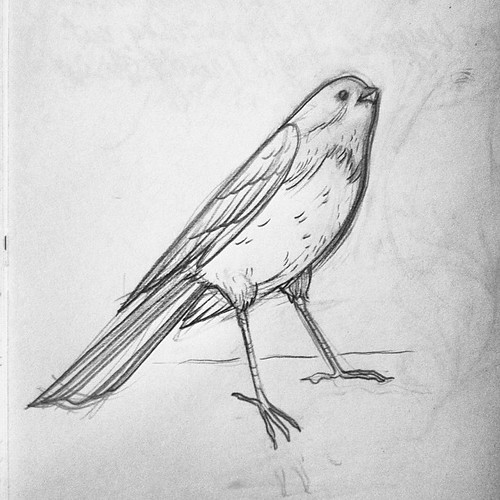 Small bird friend #sketch. He looks interested in some crumbs from a blueberry muffin.