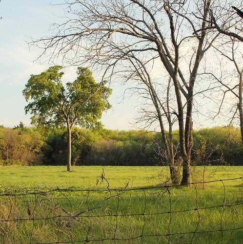 nature texas
