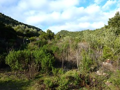Piste de Valle di Scopa : fin de la piste, vue vers le fond du vallon du Bonanda et départ de la sente d'accès au chaos