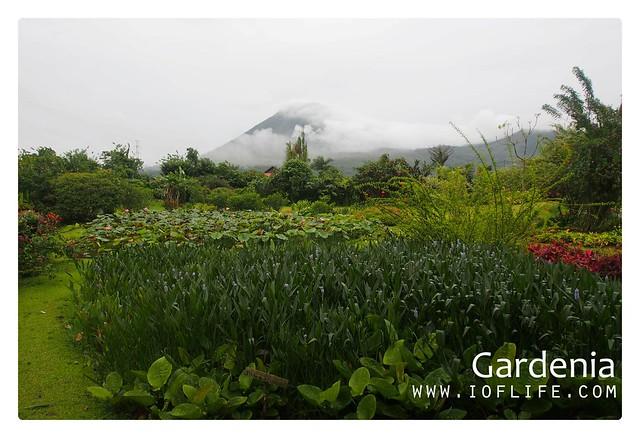 lokon gardenia manado