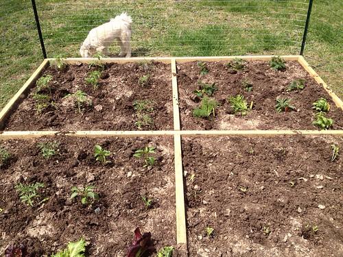 Garden, with dog.