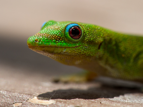 20120511_Gecko_0031