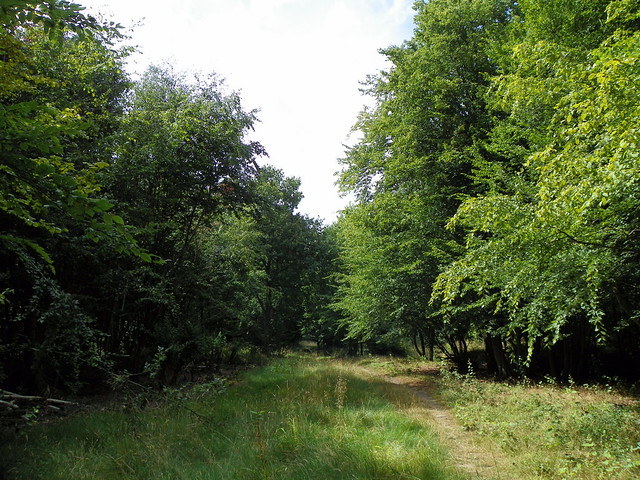 GOC Hoddesdon 054: Balls Wood, Hertford Heath
