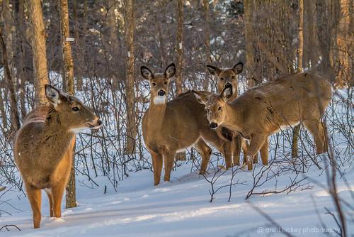 Deer Humber Arborteum by gashphoto