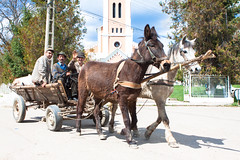 equestrianism(0.0), mule(1.0), vehicle(1.0), pack animal(1.0), coachman(1.0), horse harness(1.0), horse and buggy(1.0), land vehicle(1.0), carriage(1.0), cart(1.0),