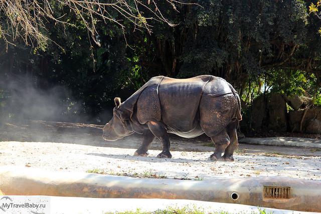 zoo013
