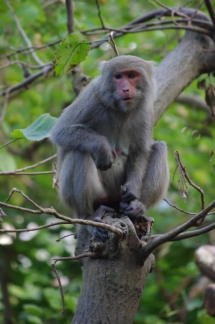 高雄柴山給猴子看