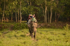 Indulge in paddle boating, joy ride on the elephant's back and other activities at the Sipahijala Wildlife Sanctuary  - Things to do in Agartala