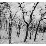 Exmoor-Trees
