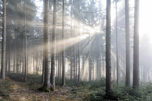autumn light fall nature fog forest landscape cool mood quiet space room foggy naturereserve passion mysterious idyllic brightness atmospheric sunbeams dreamscape spiritoflife fogg blindinglight freshmorning
