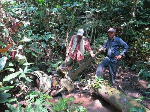 Wreck amidst elephant tracks