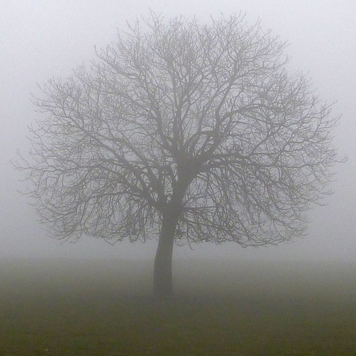misty tree by pho-Tony