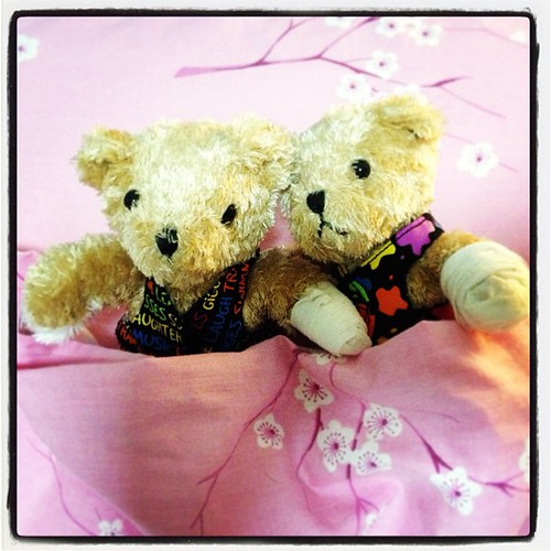 Bandaged Bear Appeal Photoaday - Day 8 - bears #bbaphotoaday #bandagedbearday #bandagedbearappeal