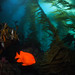 Kelp Forest at Cathedral Cove by NirupamNigam