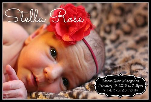 Stella Rose FINAL