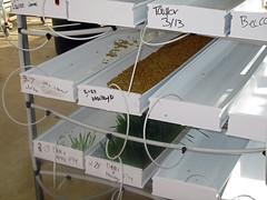 Trays of fodder