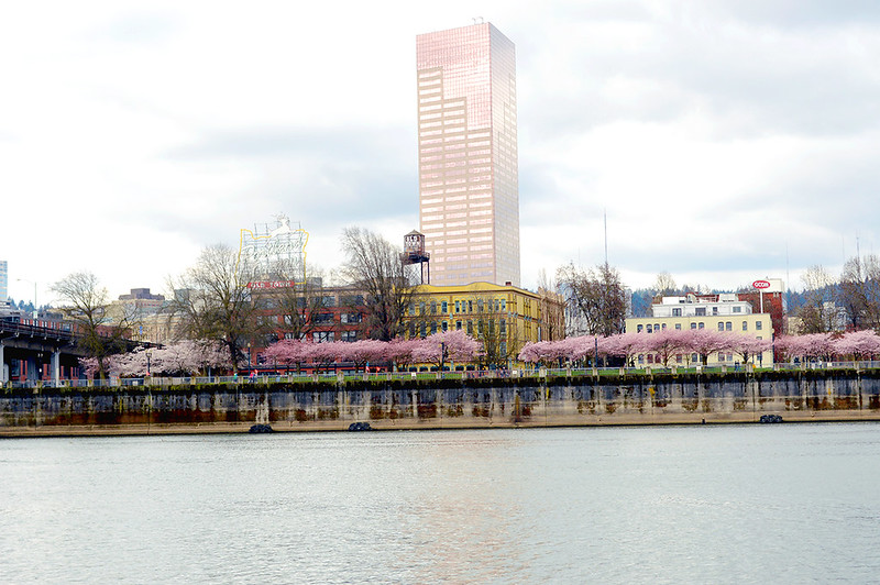 Pink Tower and Pink Blossoms