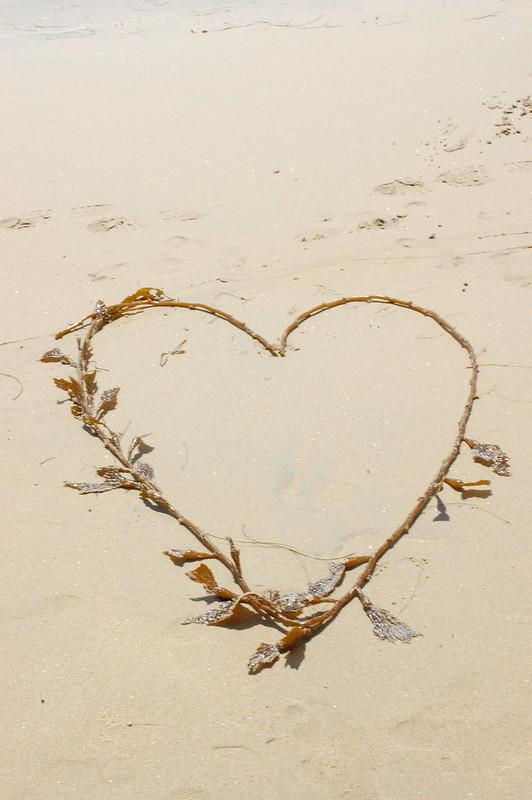 I heart kelp