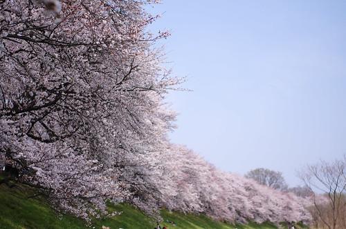 blue sky of spring