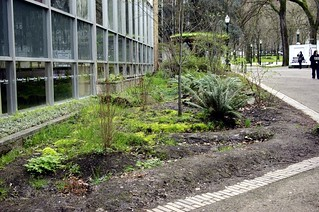 community garden, Portland State University (by: Samuel Mann, creative commons)