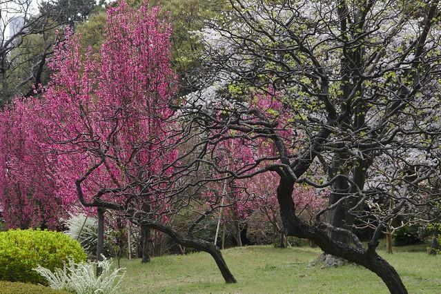 0267 - Hamarikyu Gardens