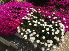 Primavera na Oriola