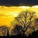 Small photo of Tree Silhouette At Sutton Bonington