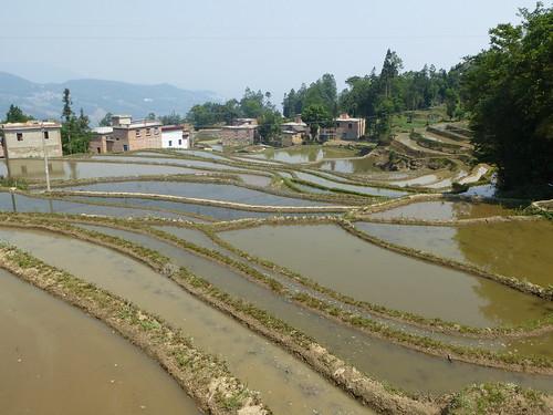 Yunnan13-Yuanyang 11 (2)