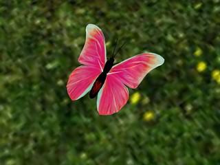 Wings: Ruby Dawn Monarch