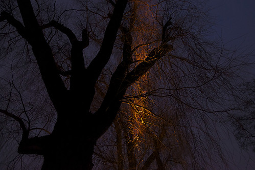 light sky tree night suomi finland dark this helsinki environment helsingfors töölönlahti skrubu pni explored tölöviken pekkanikrus