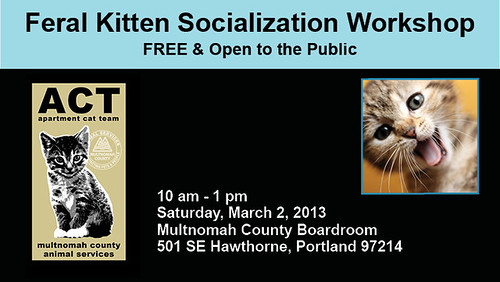 Feral Kitten Socialization Workshop