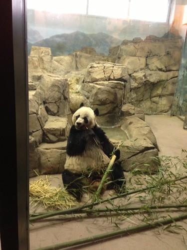 Panda! by gmwnet