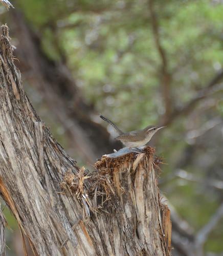 2011 08 05 wildlife-4_edited-1