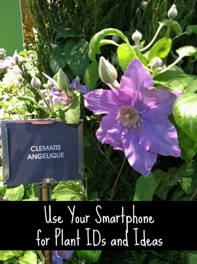 Smartphone and Plant Identification and Ideas - Thanks to your smartphone, it's easy to snap a picture of a plant or flower and save the information for later when you're planning your garden. If you use Evernote like me, you can tag and organize the photos to make garden planning even easier.