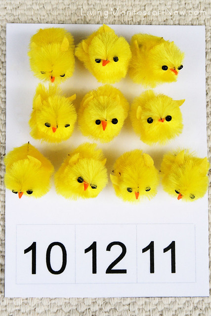 Spring Chick Count and Clip Activity