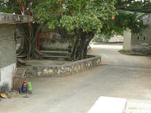 Guangdong13-Zhaoqing-Licha Cun (37)