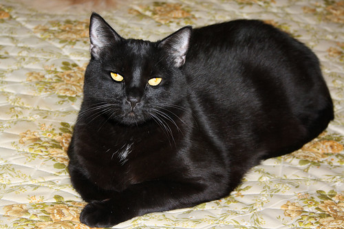 Happy Cat Loaf Day (Sunday) ~ Blacky...