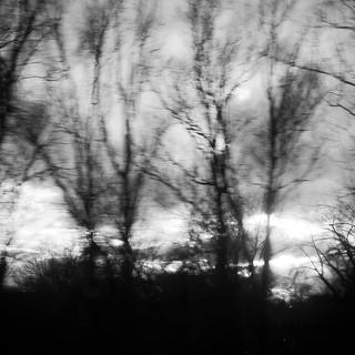 Tree Dreams 012