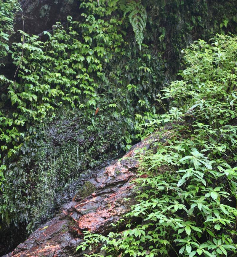 哈尤溪溫泉 (40)