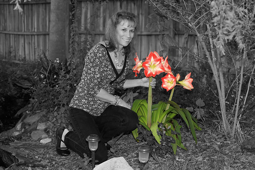 flower color tampa backyard village florida creative derek amaryllis technique talented selective carrollwood 33624 licek