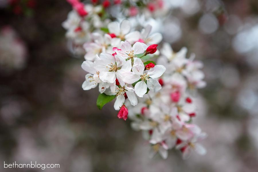 spring blossom photos