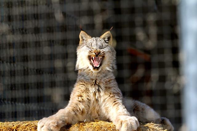 early morning yawn
